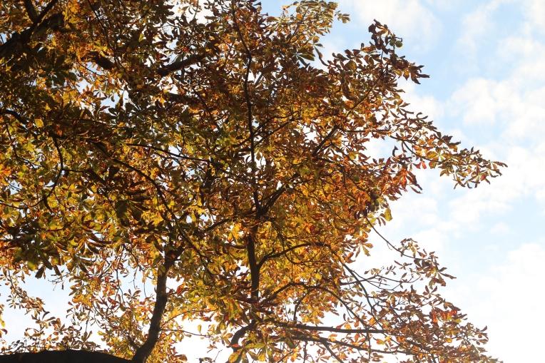 Autumn Begins in Hyde Park 052