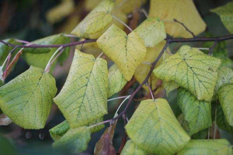 Autumn Begins in Hyde Park 152