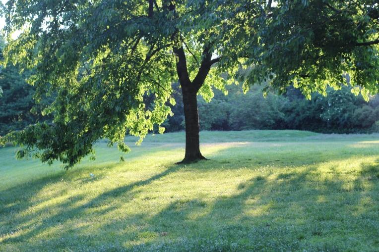 Summer evening in Hyde Park 015