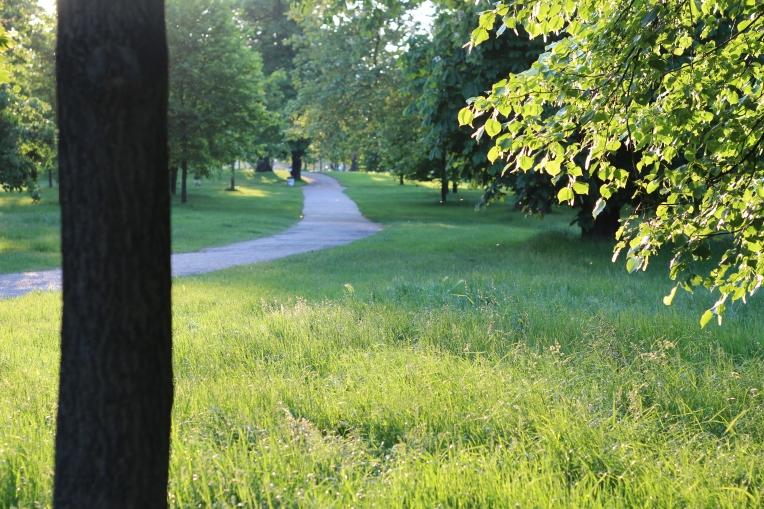 Summer evening in Hyde Park 051